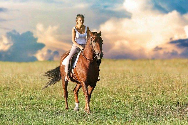 10 conseils pour que les cavaliers débutants ressemblent à des experts en selle